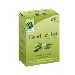 Camellia Select